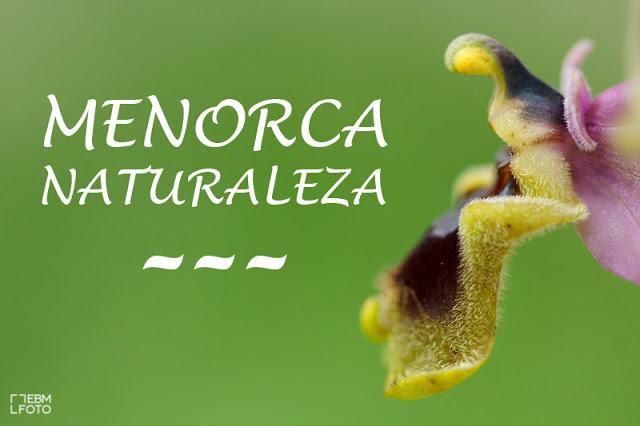 Orquidea Menorca