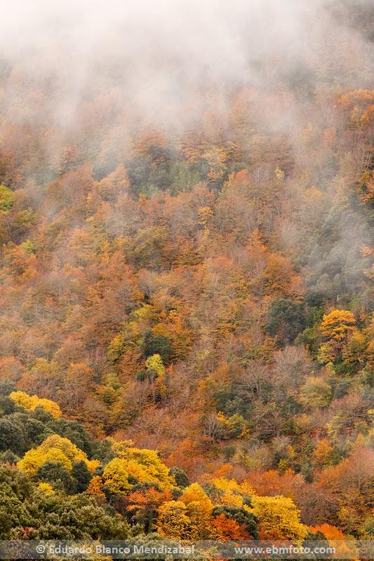 Nieblas en otoño o tardor