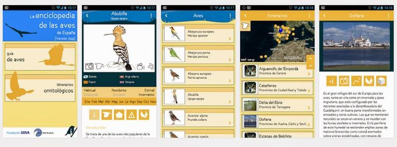 peninsula iberica identificator bird