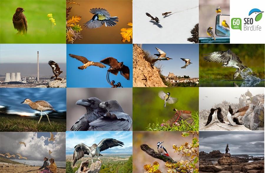 Concurso fotografico aves España