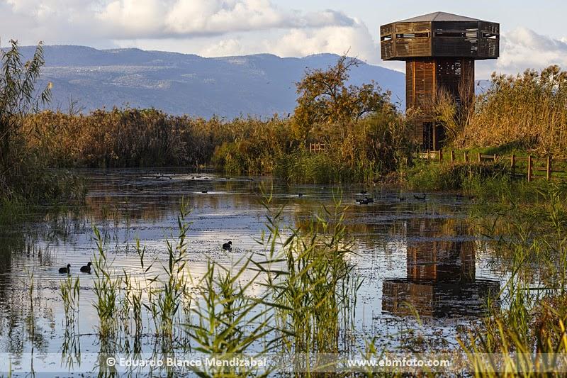 Israel, observatorio, aves