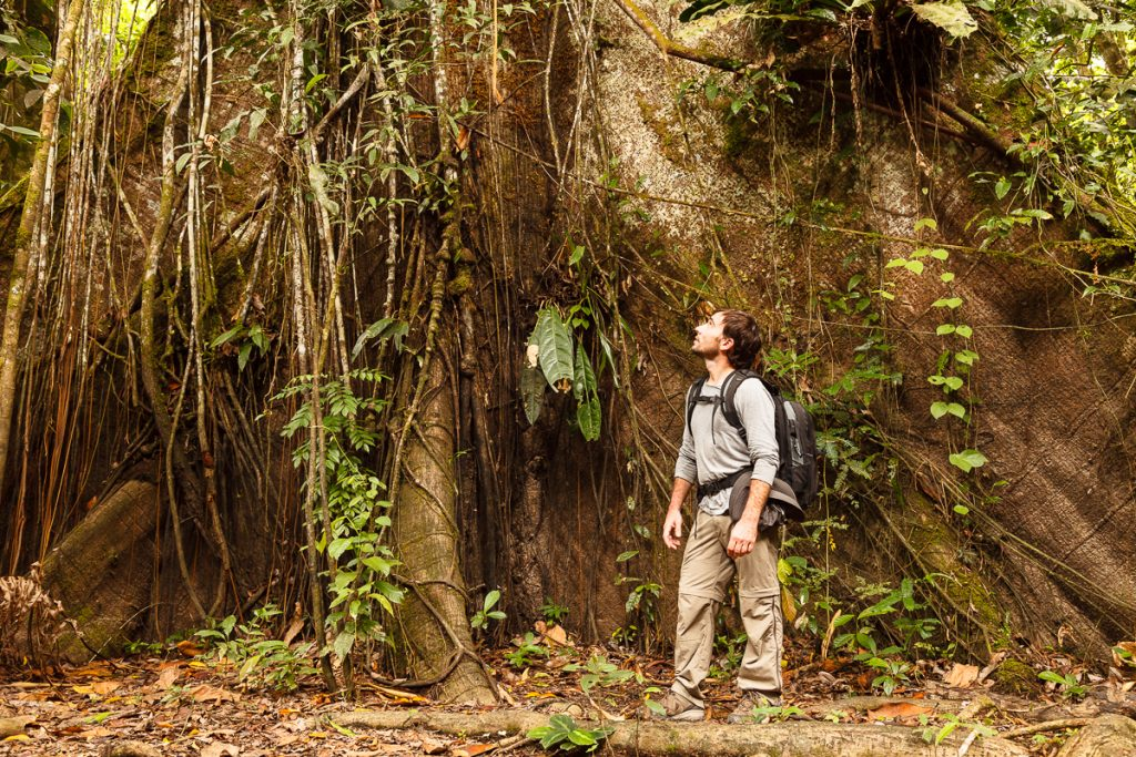 Man and ceiba, Hiking in jungle, Amacayacu, Amazonas river, Colombia, America