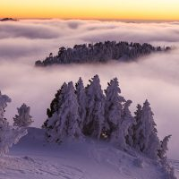ebm-9254amazing-country-fog-larra-belagua-nature-navarra-pinus-uncinata-snow-spain-travel