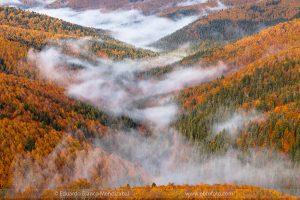 selvairati, niebla