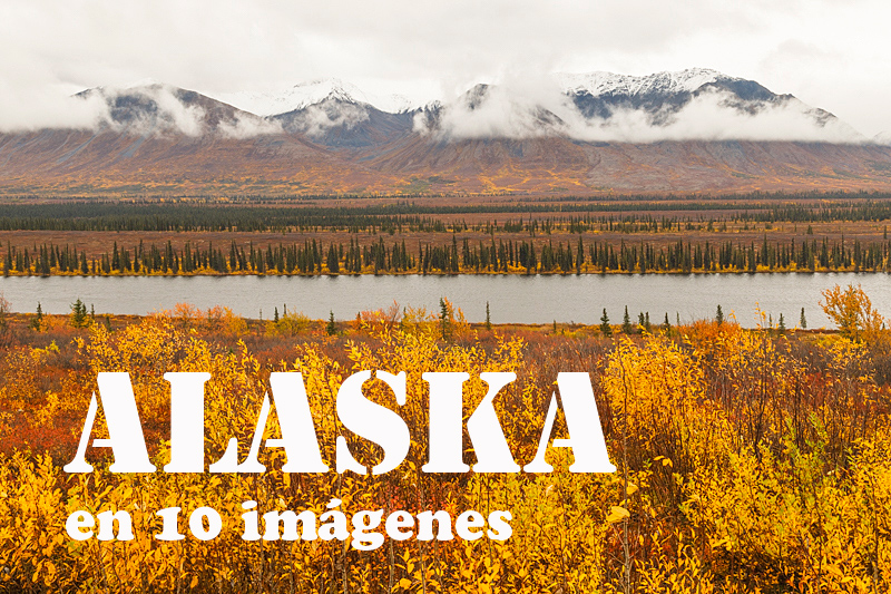 EBM-2414-Alaska,-Picea,-Plants,-United-States-of-America