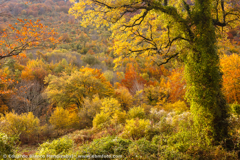 EBM-5121-Amazing, Country, Haya, Nacedero Urrederra, Nature, Navarre, Quercus, Spain, Travel