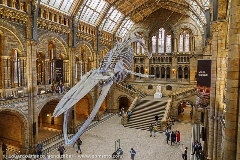 Museo-sala-ballena-Londres