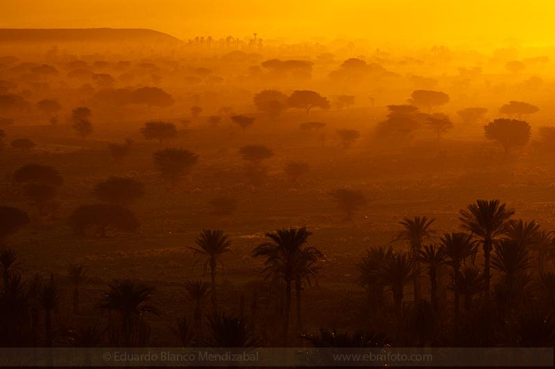 Acacia-Morocco-Nature-Nkob-Palm-tree-Plants