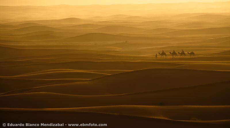 Camells and sunrise. Sand-dunes, Erg Chegaga. Sahara desert. Morocco. Africa.